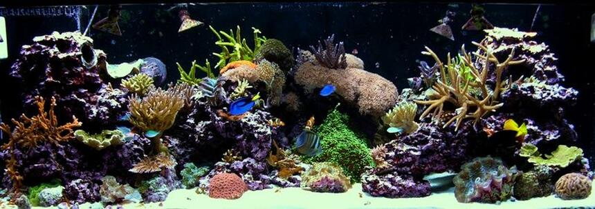 Rated #9: 180 Gallons Reef Tank - 180G mixed reef