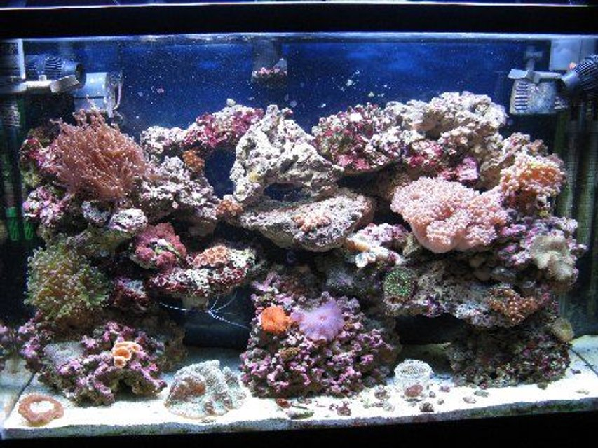 Rated #93: 45 Gallons Reef Tank - 45gl reef