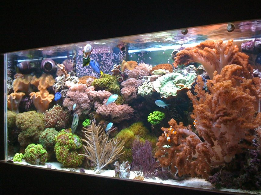 Rated #43: 90 Gallons Reef Tank - 90 gallon reef tank