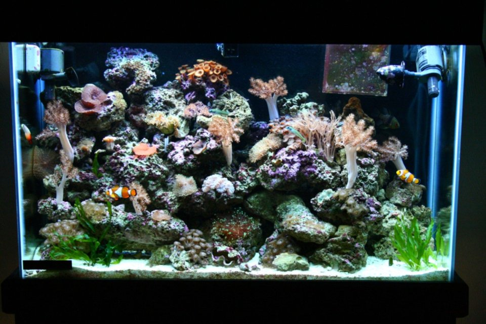 Rated #81: 45 Gallons Reef Tank - 1 year old 45 gallon tank.