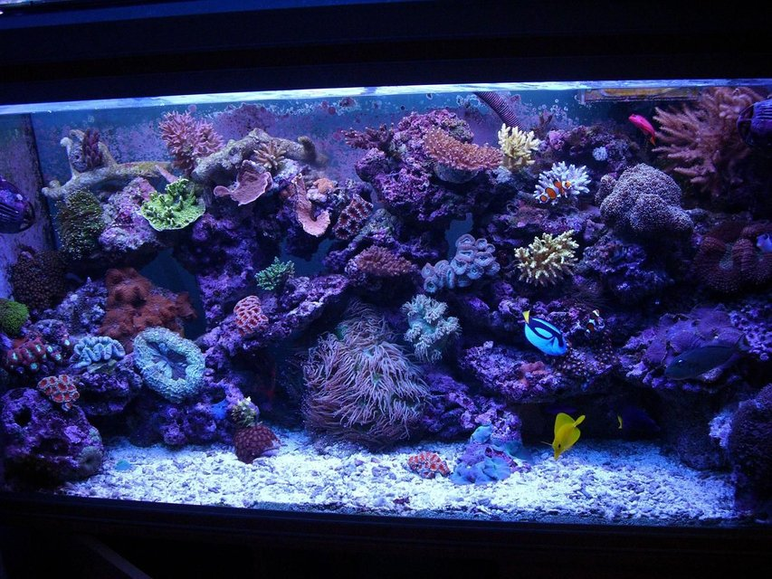 Rated #12: 100 Gallons Reef Tank - a few month ago :D