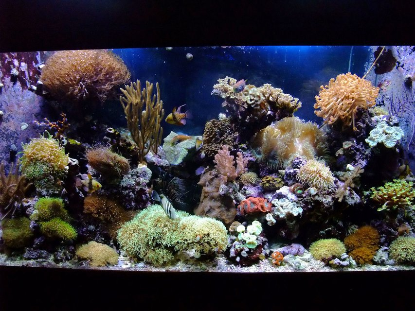 Rated #3: 130 Gallons Reef Tank - 130 Gal Mixed Reef,close to 4 years old.