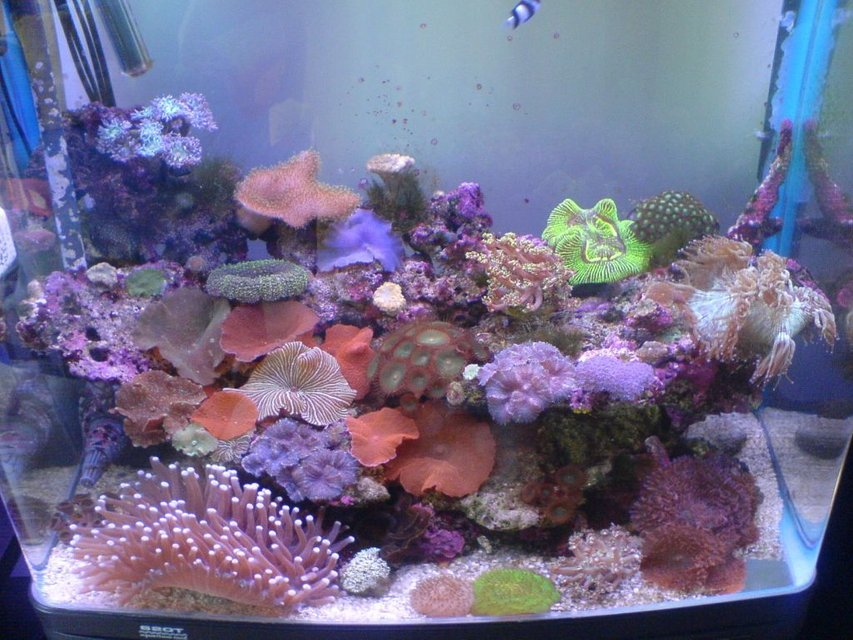 Rated #52: Reef Tank - My small tank full of goodies :) 
