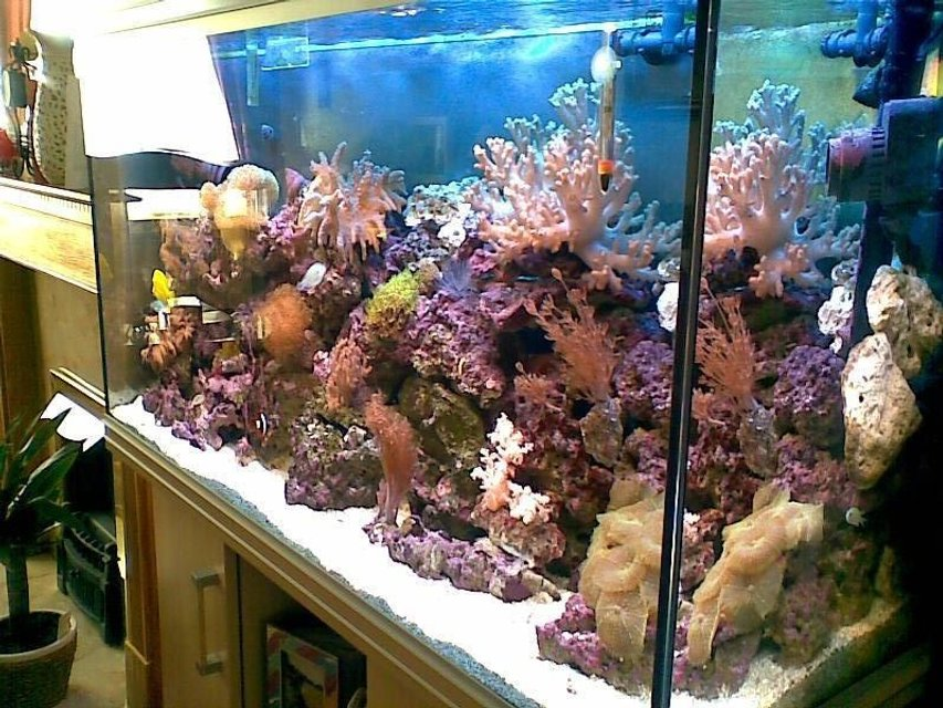 Rated #22: 60 Gallons Reef Tank - reef