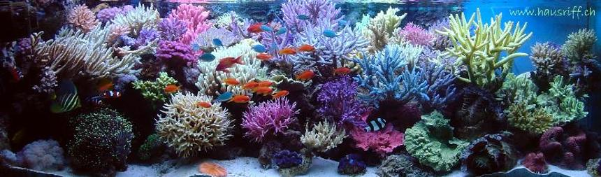 Rated #1: 210 Gallons Reef Tank - full view
