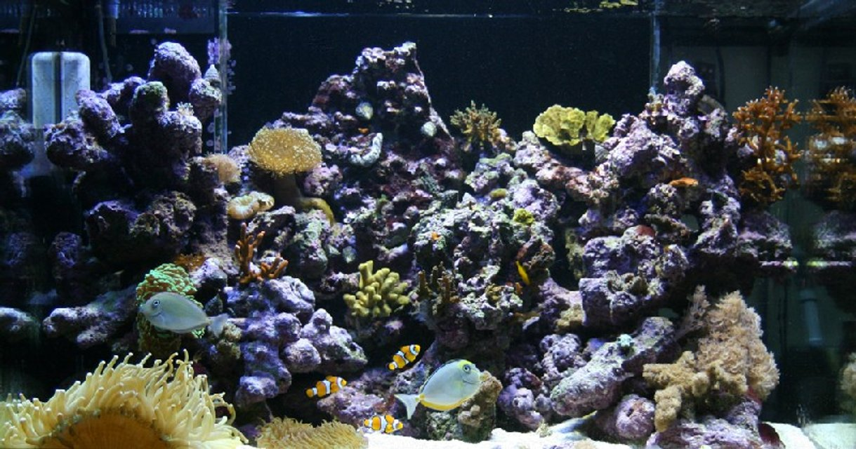 Rated #72: 90 Gallons Reef Tank - Here is a photo on my Percula 90 tank. This tank started I up in 20 Juli -2005 It contains 35kg LR