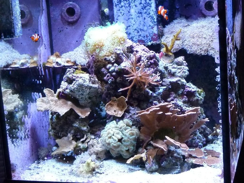 Rated #102: 30 Gallons Reef Tank - 30 gallon oceanic cube