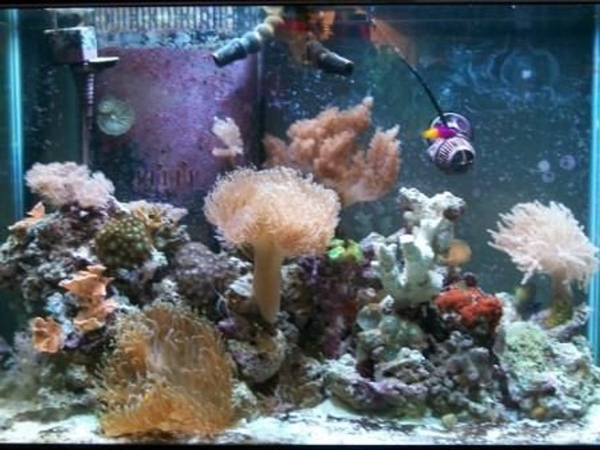 Rated #117: 65 Gallons Reef Tank - whole tank