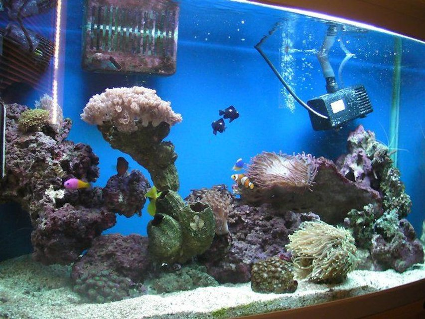 Rated #106: 46 Gallons Reef Tank - Here is my tank now i've added a bit more too it.