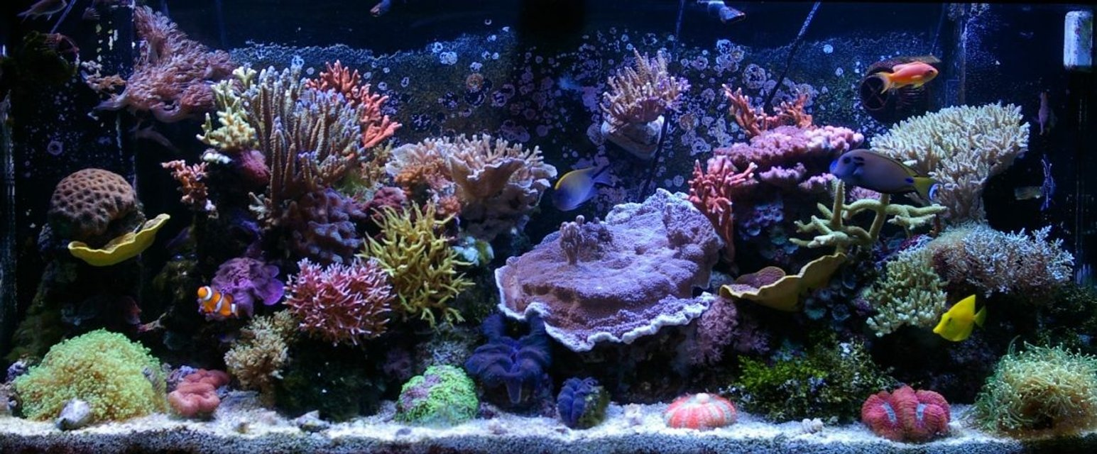 Rated #2: 150 Gallons Reef Tank - 150g SPS