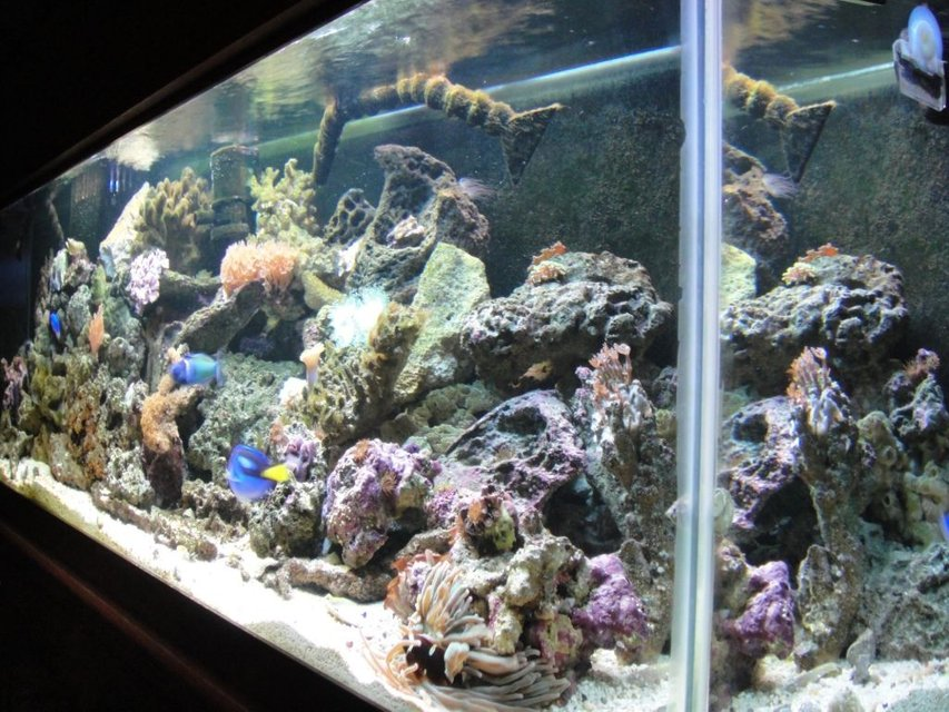Rated #72: 125 Gallons Reef Tank - my reef is my love.... my wife thinks more than her....