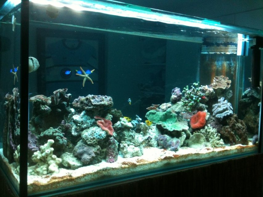 Rated #71: 275 Gallons Reef Tank - 800L reef tank
