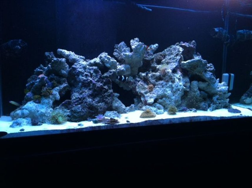 Rated #32: 90 Gallons Reef Tank - Nothing like the ocean in your living room
