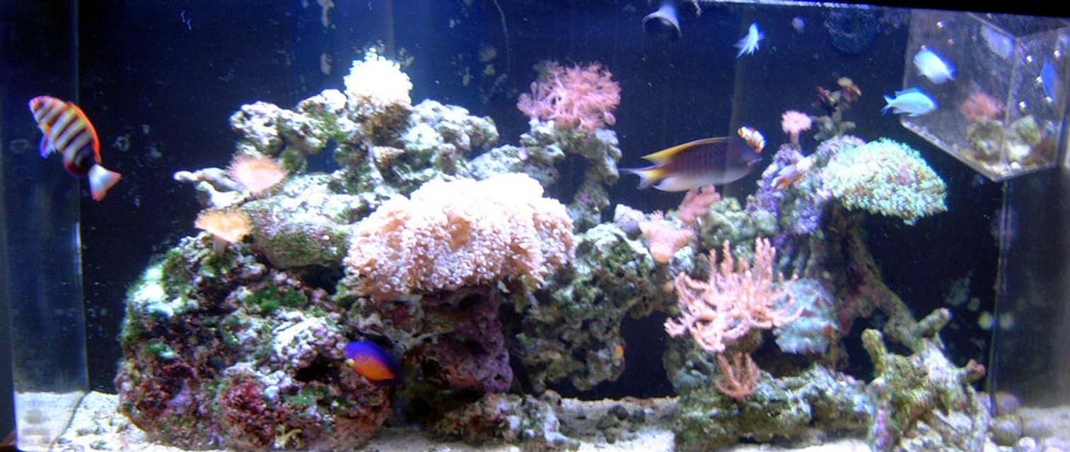 Rated #92: 90 Gallons Reef Tank - My 90 Gallon Reef