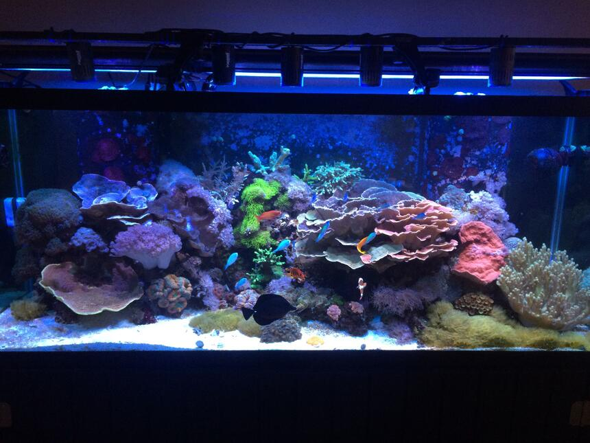 Rated #1: 210 Gallons Reef Tank - 210 gallon mixed reef.