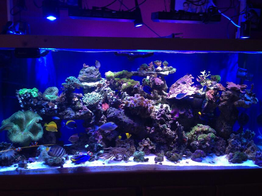 Rated #4: 220 Gallons Reef Tank - a coral reef hard and soft