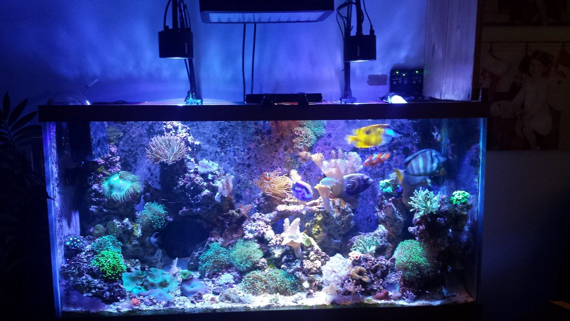 Rated #10: 90 Gallons Reef Tank - My favorite