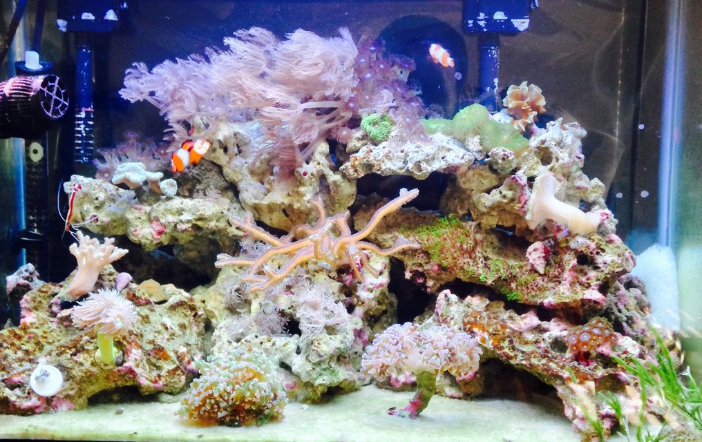 Rated #7: 20 Gallons Reef Tank - Upclose