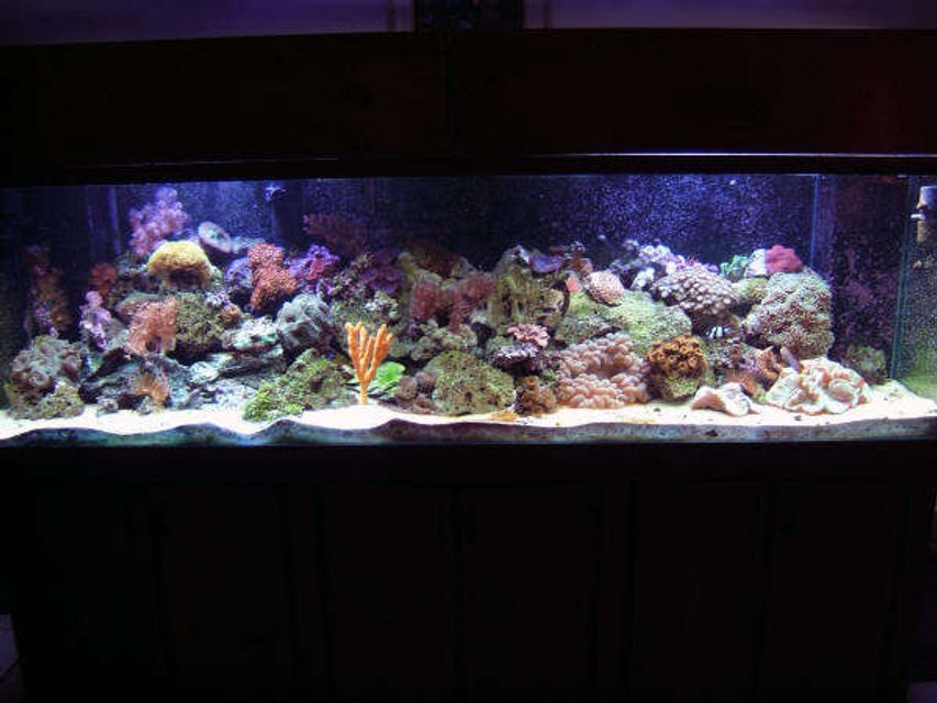 Rated #53: 160 Gallons Reef Tank - SKYDIVE182's Reef Tank