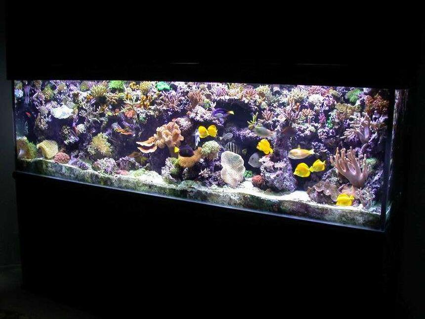 Rated #5: 300 Gallons Reef Tank - I cant fit anything else in here !