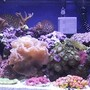 reef tank (mostly live coral and fish) - My 20 gallon long saltwater tank.