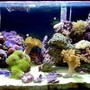 reef tank (mostly live coral and fish)