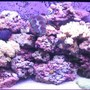 reef tank (mostly live coral and fish) - 55 Gallon Reef Tank