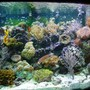 155 gallons reef tank (mostly live coral and fish) - 155 bowfront reef tank