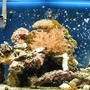 55 gallons reef tank (mostly live coral and fish) - Star Galaxea, Star polyps, Torch, Nepthea, Candy, Finger leather, Elk horn, Orange polyps, pink/orange polyps, Green/gray polyps, and a clamm (hipp...)