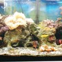 75 gallons reef tank (mostly live coral and fish) - 50 gal. bow front from oceanic.