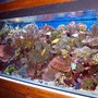 reef tank (mostly live coral and fish) - this is mi reef tank very pretty a
