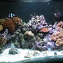 160 gallons reef tank (mostly live coral and fish) - Right side of Tank