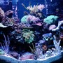 46 gallons reef tank (mostly live coral and fish) - 46 Gallon Bow