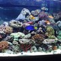 75 gallons reef tank (mostly live coral and fish) - yes