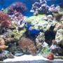 20 gallons reef tank (mostly live coral and fish) - 20 gallon reef tank