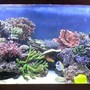 160 gallons reef tank (mostly live coral and fish) - My new tank !