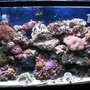 45 gallons reef tank (mostly live coral and fish) - 45gl reef