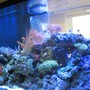 215 gallons reef tank (mostly live coral and fish) - 215