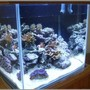 25 gallons reef tank (mostly live coral and fish) - Nano SPS Reef