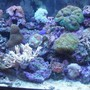 95 gallons reef tank (mostly live coral and fish) - On a bad day