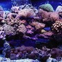 75 gallons reef tank (mostly live coral and fish) - 75 gallon reef