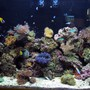 120 gallons reef tank (mostly live coral and fish) - Here is my whole tank. I apologize..not a great picture...there's some bad reflection in one corner. I'll have some new one's up soon!