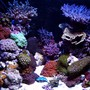 120 gallons reef tank (mostly live coral and fish) - AIDYS REEF!