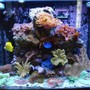 34 gallons reef tank (mostly live coral and fish) - 34 gal. Red Sea Max T -5 lighting 110 hp Chiller..UV 7 Watt.