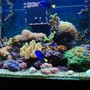 120 gallons reef tank (mostly live coral and fish) - My tank.