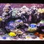 120 gallons reef tank (mostly live coral and fish) - Top Front View 120g Reef