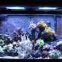 46 gallons reef tank (mostly live coral and fish) - 46 Gallon Bow mixed sps, lps, softies, zoanthid and mushroom reef with 35 corals total, purple serpent star, peppermint shrimp, emerald crab, various blue legged crabs and astrea snails. Fish - Solarensis Wrasse, Oscellaris Clownfish, Bicolor Blenny, Green Spotted Mandarin. 65 lbs of LR and 15lbs of LS. 2 x 150 watts of 14,000K Phoenix bulbs Sunpod. Aqua C Remora Skimmer, 3 Hydor Koralia 1's.