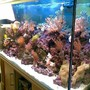 60 gallons reef tank (mostly live coral and fish) - reef