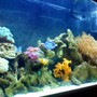 55 gallons reef tank (mostly live coral and fish) - MY 55 GALLON REEF TANK 4 MONTHS OLD, MUCH MORE ON THE WAY.