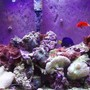reef tank (mostly live coral and fish) - 30 gallon Tall 24x12x24. PC lights two 65 watt bulbs with nite light all running of coral life timer. purple tang, flame angel and yellow tail damsel. mushroom coral.
